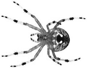 Spiders: the ultimate material synthesizers