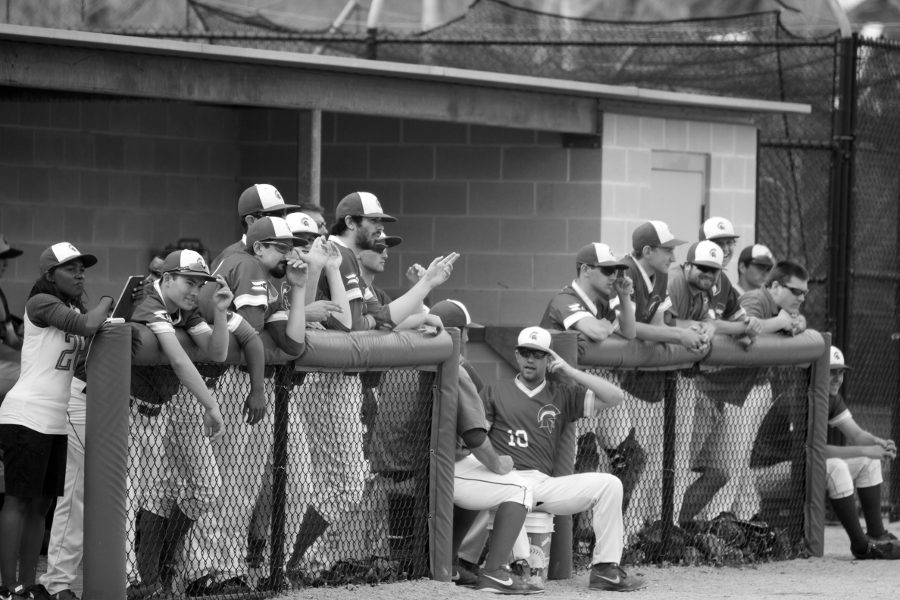 Last years team cheers on their teammates from the dugout at Nobby's Ballpark.  The 2015 Spartans begin their season in Florida with the UAA tournament next week.