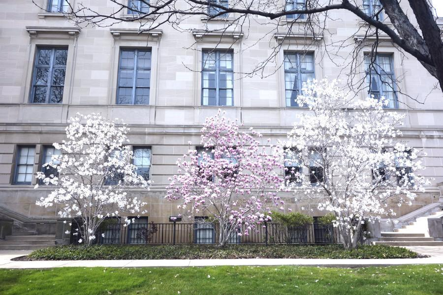 Flowers+blooming+on+trees+outside+of+Severance+Hall.+Spring+is+here+and+the+last+stretch+of+the+semester+is+in+sight.