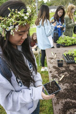Farm Harvest Festival encourages students to live sustainably