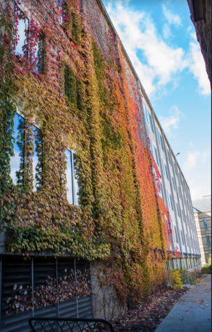 The side of Millis Hall covered in colorful ivy showcases the beautiful autumn leaves on CWRU